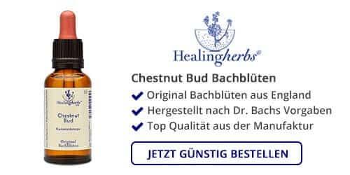 Chestnut Bud kaufen