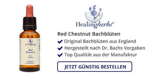 Red Chestnut kaufen