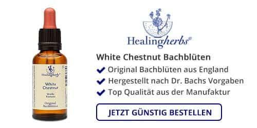 White Chestnut kaufen
