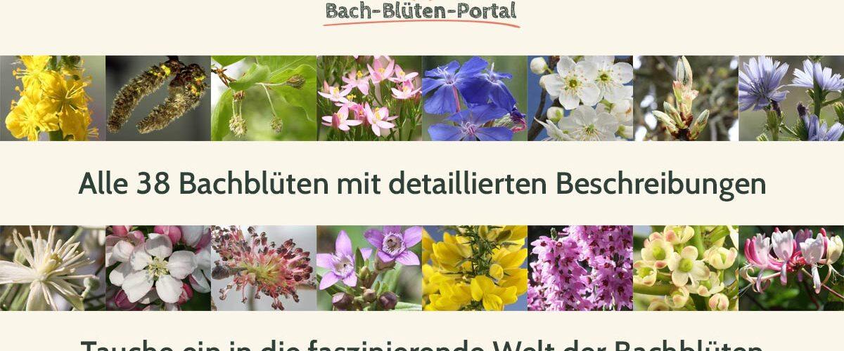 Alle 38 Bachblüten hier im Bach-Blüten-Portal